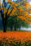 Fall Sanctuary