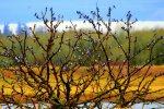 Swallow Gathering Tree