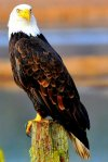 Symbol of Freedom, Whidbey Island