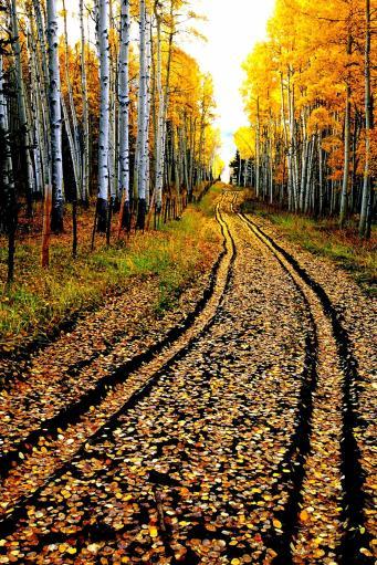 The Road Less Traveled - Lg